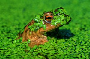 Frog-1 by Aleksander Cufar EFIAP/p EPSA
