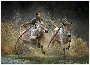 Rushing Cow by Chau Kei Checky Lam