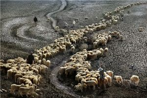 The Dry Season by Huu Hung Truong EFIAP