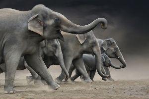 Elefantenherde by Josef Palfrader EFIAP/p