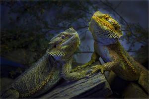 Dragons Moonlight Romance by John Abbott