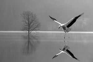 Mirror-1-Bw by Aleksander Cufar EFIAP/p EPSA