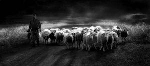 Shepherd Nr 7 by Kostas Chalkiadakis EFIAP EPSA UPIZeusCR3