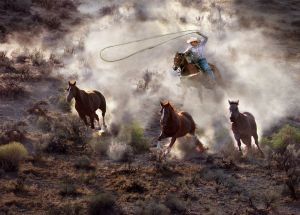 Catching Three Horses by Shiu Gun Wong HonFRPS FPSA EPSA EFIAP