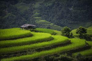 Rice Terace Hoang Su Phi by Nguyen Vu Phuoc