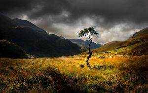 Lone Tree Glen Dubhlochan by Tom Richardson ARPS EFIAP DPAGB BPE4*