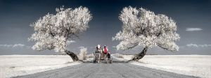 Embrace of Trees by Elek Papp MFIAP