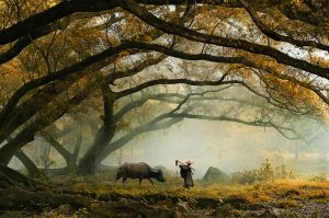 Going Home by Min Tan PPSA