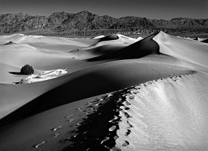 A Walk in the Dunes by David C G Smith EFIAP/s FAPS
