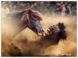 Fighting Horses by Joseph Tam EFIAP PPSA FAPS AWIEP