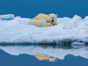 Polar Bear No6 by Craig Parker AFIAP AAPS
