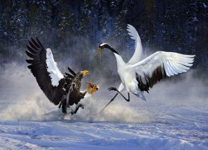 Snow Fighting by Lung-Tsai Wang