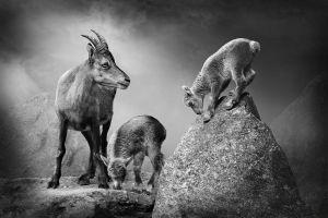Frueh Uebt Sich by Josef Palfrader EFIAP/p
