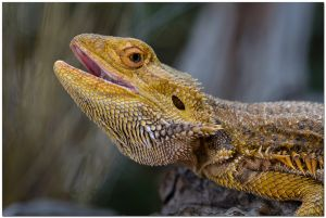 Beautiful Lizard by Victoria Reid