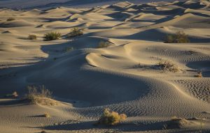 Mesquite Dunes by Ron Sharples