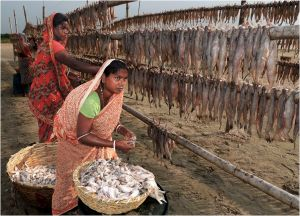 Fisherwoman at Work by Subrata Bysack