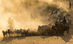 QIDC HM - Dust Dirt Drought by Sandra Boles AFIAP AAPS