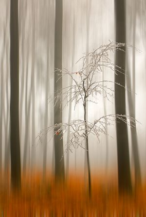 QIDC HM - Waiting for Winter by Birgit Pustelnik AFIAP PPSA
