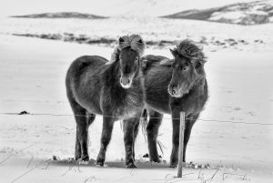 UPI HM - Icelandic Beauty by Francis King