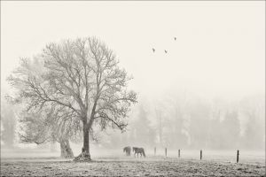 PSQ HM - Horses on a Foggy Morning by Bill Power FIPF AFIAP