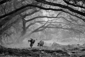 PSQ HM - Trunks Canopy BW by The Eng Loe Djatinegoro