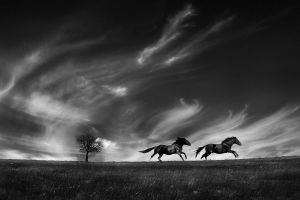 QIDC HM - Running with the Wind by Lajos Nagy EFIAPp MPSA MAAFR