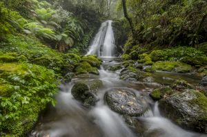 APS Merit  Rainforest Waterfall by Glenn Gilligan