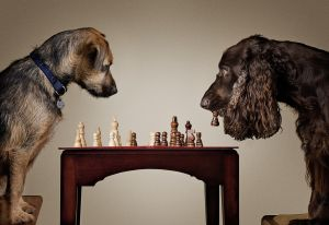 FIAP HM - Chess Mates by Charles Akerstrom LRPS BPE2