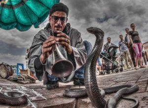 APS Merit Snake Charmer by David Sadler AFIAP