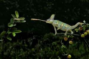 QIDC Bronze (Judges Choice) Chameleon by Hsiu-Chin Lee