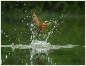 UPI Bronze Kingfisher Catching by Chau Kei Checky Lam